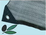 Rete per olive a teli Mt:5x10